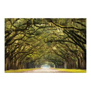 Schilderij Forest Path 120x80