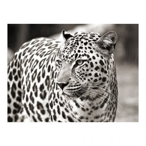 Schilderij Leopard 120x80