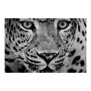 Schilderij Leopard Dichtbij 120x80