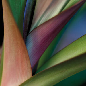 Aluart Bird Of Paradise Plant