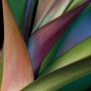 Aluart Bird Of Paradise Plant