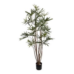 Plant 70100074
