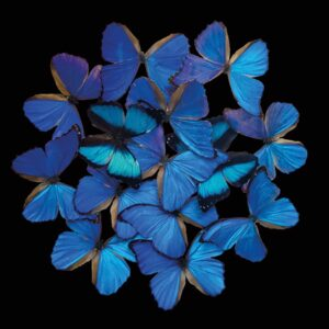 Schilderij-matdib1901-blue-butterfly